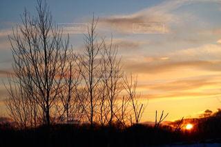 背景の夕日とツリーの写真・画像素材[956900]