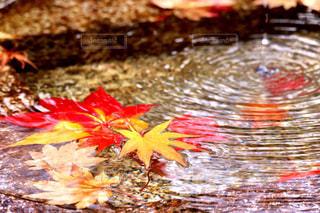 近くにいくつかの水のの写真・画像素材[956910]