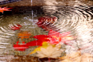 水の中の鳥の写真・画像素材[956917]