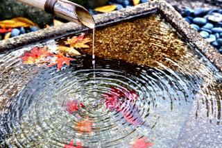 生きる水の写真・画像素材[956920]