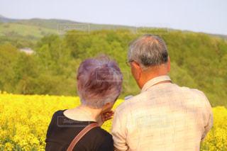 菜の花畑と祖父母の写真・画像素材[1018910]