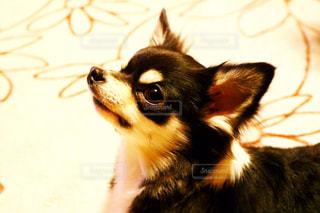 近くに犬のアップの写真・画像素材[1163995]