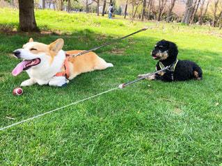 犬,自然,Smile,スマイル,北海道,笑顔,札幌,微笑み,中島公園,緑地