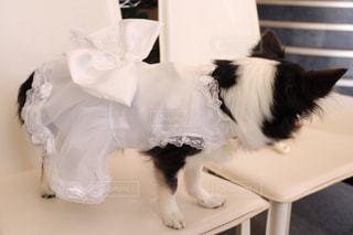 ウェディングドレスの写真・画像素材[1218817]