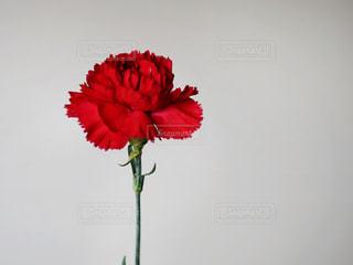 テーブルの上に花の花瓶の写真・画像素材[3220918]