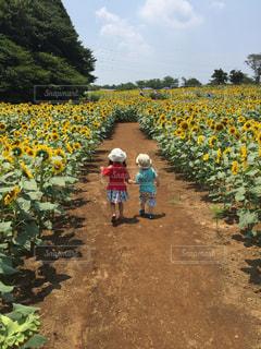 夏,花畑,ひまわり,帽子,子供,仲良し,姉弟,成田ゆめ牧場,PassMe