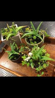 お気に入りの植木鉢に多肉植物寄せ植え♡の写真・画像素材[730180]