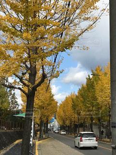 道の端に木の写真・画像素材[890577]