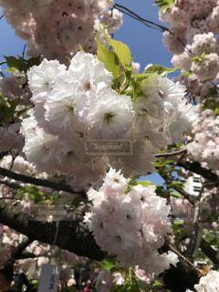 近くの花のアップの写真・画像素材[1126055]