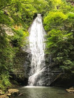 森の中の滝の写真・画像素材[1458708]