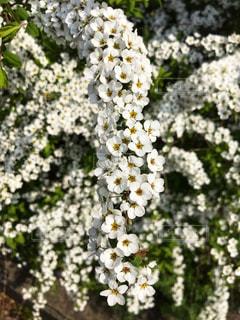 花の写真・画像素材[1968471]