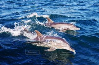 水中を泳ぐ動物 - No.707662