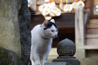 建物の前に座っている猫 - No.734123