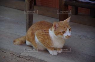 テーブルの上に座ってオレンジと白猫 - No.737803