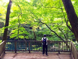 木製フェンスの上に立っている人 - No.766935
