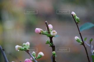近くに植物の花のアップ - No.812863