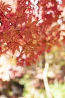 木の花の花瓶の写真・画像素材[880022]