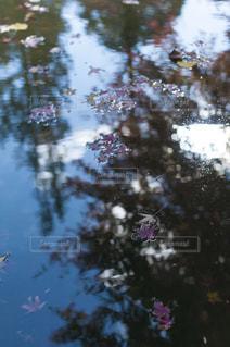 近くに池のアップの写真・画像素材[880030]