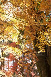近くの木のアップの写真・画像素材[880453]
