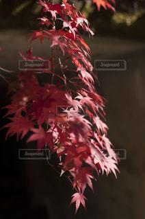 近くの花のアップの写真・画像素材[880454]
