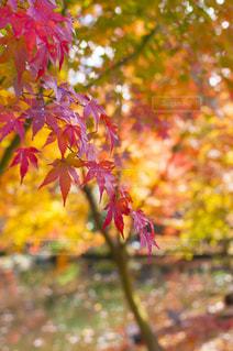 植物の木の成長の写真・画像素材[880455]
