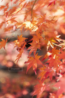 近くの木のアップの写真・画像素材[880457]