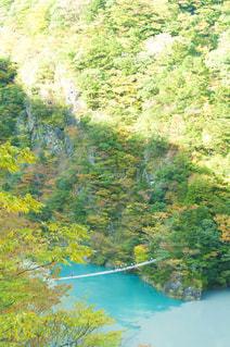 木々 に囲まれた川の写真・画像素材[880726]