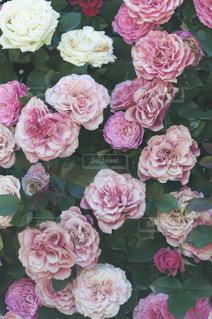近くの花のアップの写真・画像素材[884293]