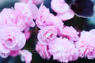 近くの花のアップ - No.884296