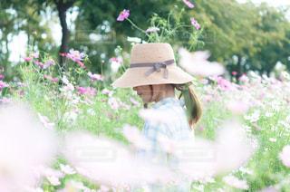 近くの花のアップの写真・画像素材[893224]
