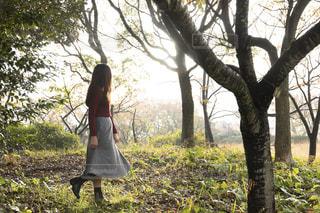 木の隣に立っている人の写真・画像素材[1617054]