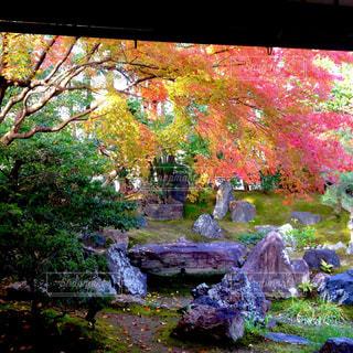 高台寺 圓徳院の写真・画像素材[840657]
