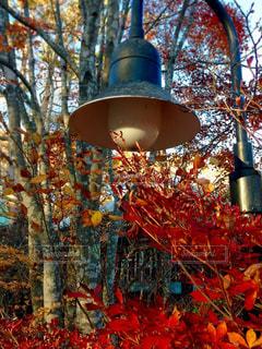 紅葉と外灯の写真・画像素材[851246]