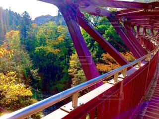 あやとり橋と紅葉の写真・画像素材[854023]