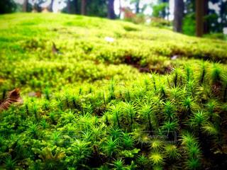 苔の里の写真・画像素材[876120]