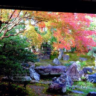 紅葉,庭,京都,カラフル,高台寺,ねね,圓徳院