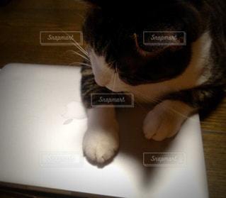 パソコンと猫の写真・画像素材[932335]