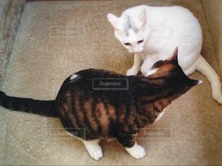 猫のケンカの写真・画像素材[932438]