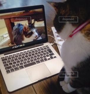 パソコンと猫の写真・画像素材[942772]