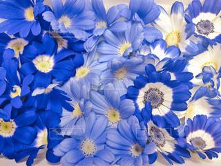 花,フラワー,花びら,鮮やか,ブルー,フラワーアレンジ,アレンジメント,食用花,エディブルフラワー