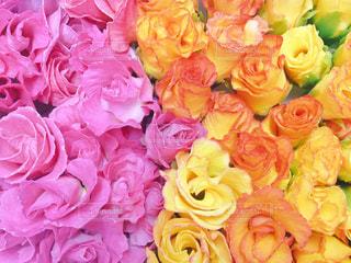 花,ピンク,フラワー,花びら,鮮やか,イエロー,フラワーアレンジ,アレンジメント,食用花,エディブルフラワー
