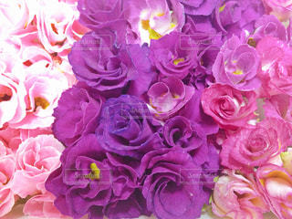 花,ピンク,フラワー,花びら,鮮やか,フラワーアレンジ,アレンジメント,食用花,エディブルフラワー