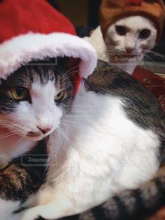 猫,動物,帽子,ねこ,クリスマス,cat,思い出,被り物,Christmas,Xmas,ネコ,生きもの