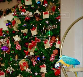 カラフル,鮮やか,旅行,クリスマス,デジカメ,ホテル,ハワイ,装飾,クリスマスツリー,一眼レフ,canon,オウム,12月,飾り,オーナメント