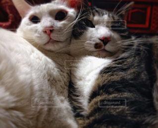 ネコのきょうだいの写真・画像素材[975018]
