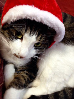 クリスマスの写真・画像素材[975065]
