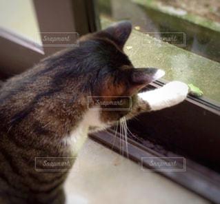 ネコとカエルの写真・画像素材[978766]