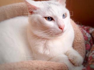 猫の写真・画像素材[978963]