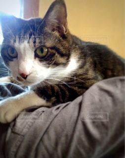 おんぶ猫の写真・画像素材[978968]
