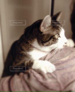 おんぶされるネコの写真・画像素材[980444]